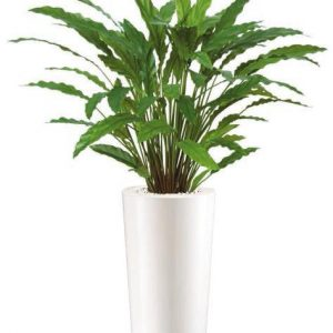 Calathea - plante artificiale, plante interior, plante lux